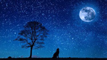 初心者が物撮りするなら太陽光が入らない夜が最もおすすめだという発見
